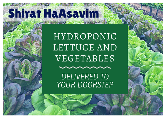 Shirat HaAsavim - hydroponic lettuce and vegetables